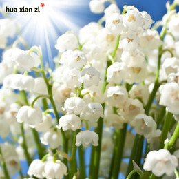 Shop growing perennials seeds uk growing perennials seeds free easy to grow heirloom white lily of the valley convallaria majalis perennial flower seeds professional pack 50 seeds mightylinksfo