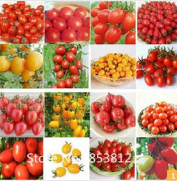 sale300 piece 16 colors tomato seeds new garden flowers vegetable seeds for garden vegetable seed sales promotion