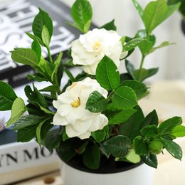 Lovely 20pcs Gardenia Seed Plants Seed Hydroponic Pot Four Office Indoor Air  Purification Radiation To Beautify The Bonsai Flower