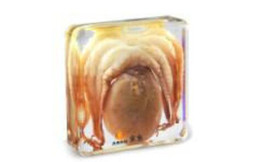 resin mice UK - Octopus Specimen Learning&Education Toys&Gifts Resin Embedded Sea Animal Transparent Mouse Paperweight Kids New Type Science&Discovery Kits