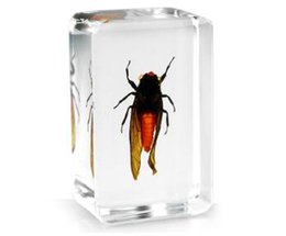 Transparent Mice NZ - Acrylic Resin Embedded Red Cicada Teaching Specimen Transparent Mouse Paperweight Block Type Kids Science Learning&Discovery Education Kits