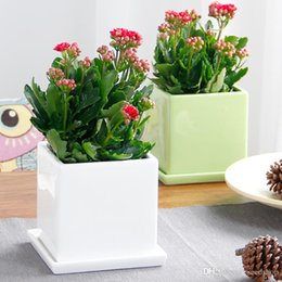 small plants for office. 20pcs Longevity Flower Seeds Potted Flowers Four Seasons Flowering Plants Living Room Office Desk, Small For N
