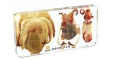 resin mice UK - Sea Octopus Specimen Learning&Education Toys&Gifts Resin Embedded Ocean Animal Transparent Mouse Paperweight Kids New Science&Discovery Kits