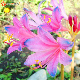 Shop blue flowers perennial uk blue flowers perennial free 100 seeds bag blue pink lycoris seeds potted plant seed lycoris radiata flower seeds gardening perennial planting mightylinksfo