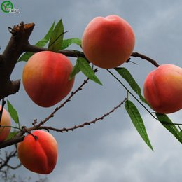 Peaches seeds online shopping - Peach Seeds garden plants Bonsai organic fruit and vegetable seeds V016