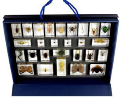 resin blocks Australia - Animal&Insect Specimen Kingdom Resin Embedded Animal&Insect Block Transparent Mouse Paperweight Baby Favorite Biology Science Learning Gifts