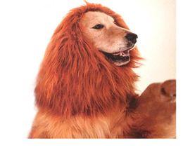 $enCountryForm.capitalKeyWord Canada - Creative Pet Costume Dog Lion Wigs Mane Hair Festival Party Fancy Dress Halloween Costume pet lion hair pet hair accessories no ears