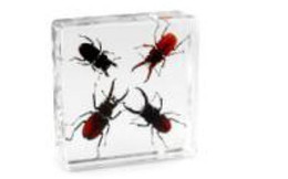 resin mice UK - 4 Stag Beetles Set Specimen Acrylic Resin Embedded Real Beetles Transparent Mouse Paperweight Kids New Type Biology Learning& Education Kits