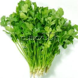 Coriander Cilantro Coriandrum sativum NON-GMO Herb 200 семян Для посадки легко растущих фамильных овощных ароматных кулинарных растений