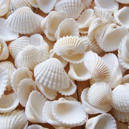 Stile mediterraneo Bianco Seashell 50 PZ / LOTTO Fai Da Te Lucido Naturale conchiglia Decorazione Foto Puntelli paesaggio acquario Artigianato