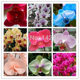 organic flowers seeds Australia - wholesalePhalaenopsis Seeds bonsai balcony flower orchid seeds bundle - 200 pcs Mixplant bonsai