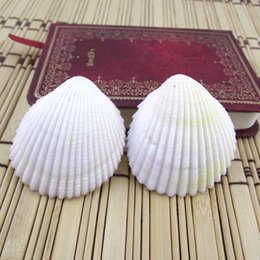 Animal Parts NZ - Shell Savageness Conch Wind Chime Parts Scallop Slices Cowry Wall Stickers Room Ornament Sea Shells Direct Deal 0 5zc C