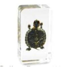 $enCountryForm.capitalKeyWord NZ - Turtle Specimen Acrylic Resin Embedded Tortoise Biology Teaching Kits Transparent Mouse Block Student Science Learning&Education Specimems