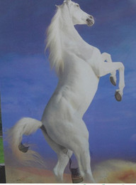 white horse oils NZ - Framed White Horse,Pure Hand Painted ANIMALS Art Oil Painting On Thick Canvas.Multi sizes Available Free Shipping HS057
