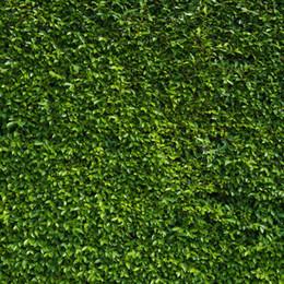 $enCountryForm.capitalKeyWord Canada - Green Leaves Wall Photography Backdrops Vinyl Spring Theme Photo Shoot Backdrop Children kids Portrait Studio Background 10x10ft