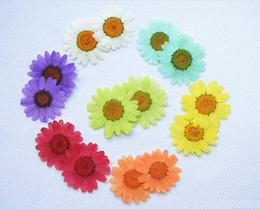 $enCountryForm.capitalKeyWord NZ - 250pcs 30mm Pressed Press Dried Daisy Dry Flower Plants For Epoxy Resin Pendant Necklace Jewelry Making Craft DIY Accessories