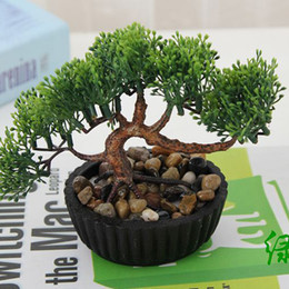 Small Indoor Plants Online | Small Indoor Pot Plants for Sale