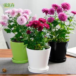 Small Indoor Plants Online Shopping Small Indoor Flowering Plants