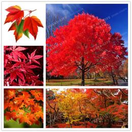 Shop Japanese Maple Wholesale Uk Japanese Maple Wholesale Free