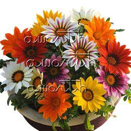 Garden treasures online shopping - 100 Gazania Treasure Flower Seeds Can Reseed Easy to Care for DIY Home Garden Bonsai Container Plant