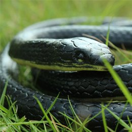 toy gardens NZ - Wholesale-Halloween Realistic Soft Rubber Toy Snake Safari Garden Props Joke Prank Gift About 130cm Novelty and Gag Playing Jokes Toys