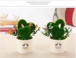 Live Indoor Plants NZ | Buy New Live Indoor Plants Online from Best ...