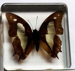 Sales Toys China Canada - China Hot Sale Butterfly Specimen Resin Embedded Butterfly Learning&Education Toys&Gifts Transparent Mouse Paperweight Kids Science Kits