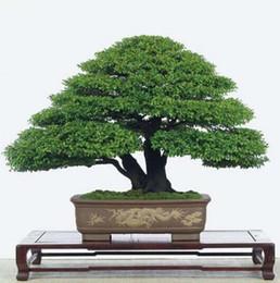 30 шт. / пакет семена японской сосны бонсай цветок легко растет DIY главная сад бонсия легко расти