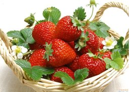 Discount strawberry pack - Rare Red Climbing Strawberry Organic Seeds, Professional Pack, 100 Seeds   Pack, Juicy Sweet Bonsai Fruit Seeds