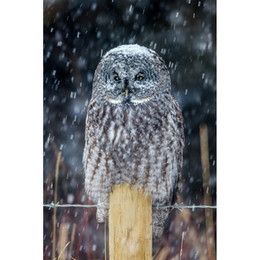 China Snowy Owl DIY Diamond Painting Embroidery 5D Cross Stitch Crystal Square Unfinish Home Bedroom Wall Art Decor Craft Gift suppliers