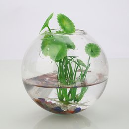 Shop Wall Glass Terrarium Uk Wall Glass Terrarium Free Delivery To