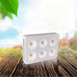 Shop Cree Grow Lights Uk Cree Grow Lights Free Delivery