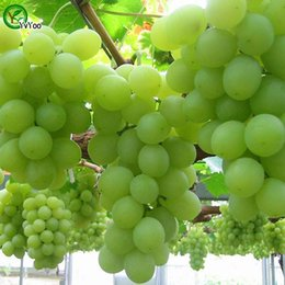$enCountryForm.capitalKeyWord Australia - Easy to grow Green Grape seed sweet and delicious fruit fruiting bonsai Villa grapes 30 Seeds Pack