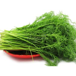 Wholesale Herb Seeds UK - Dill Herb 200 Seeds Easy-growing Non-Gmo Heirloom Container Balcony Vegetable Very Easy to Grow in Pot or Garden