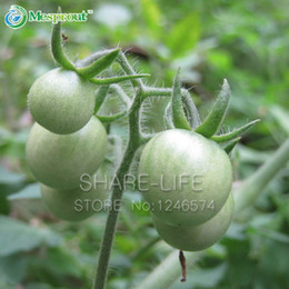 fruit vegetable seed wholesaler NZ - 100 Pcs Green Tomato Balcony Fruits Vegetables Potted Bonsai Plant Tomatoes Seeds