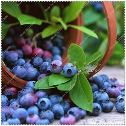 $enCountryForm.capitalKeyWord Australia - Easy to grow blueberry seed quality south fruit ashei with nutritional bowl shipments to ensure survival 30 Seeds Pack