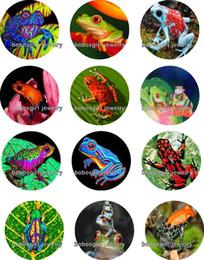 $enCountryForm.capitalKeyWord Canada - Free shipping frog Glass Snap button Jewelry Charm Popper for Snap Jewelry good quality 12pcs   lot Gl273 jewelry making