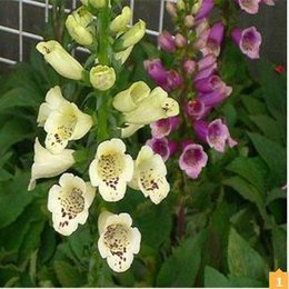 Shop spring flowers seeds uk spring flowers seeds free delivery to spring bonsai digitalis seeds 100pcs 10kinds mix flower seeds novel blooming plant for courtyard garden free shipping mightylinksfo