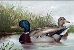 $enCountryForm.capitalKeyWord Canada - Framed Ducks in Pond,pure Hand Painted Animal Art Oil Painting On High Quality Canvas.Multi sizes Available Free Shipping A010