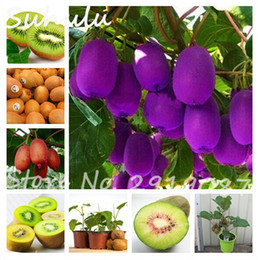 kiwi fruit seeds 2019 - Big Promotion! 200 Pcs Kiwi Seeds Organic Delicious Fruit Vegetable Melon Seed Planted Potted Plants Trees Home Free Shi