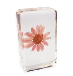 $enCountryForm.capitalKeyWord Australia - Acrylic Resin Embedded Specimen Snowland Daisy Flower Transparent Paperweight Block Festival Gifts Science Teaching&Learning Tools&Toys