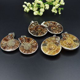 Natural Ammonite Fossil Pendant Australia - Natural Ammonite Fossil Stone Polishing Pendant 28-40mm Wholesale