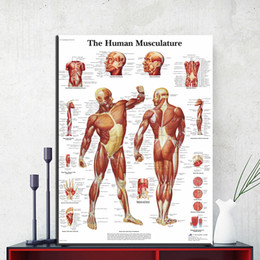 hospital cartoons NZ - 1 Panel Human Body Anatomy Canvas Art Print Painting Poster Wall Pictures For Living Room Home Decorative Hospital Decor No Frame