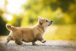 Discount puppy wall decor - puppy dog bokeh bubble cute little animal artwork living room decor home wall art decor wood frame fabric posters MD829