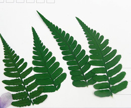 $enCountryForm.capitalKeyWord Canada - 2019 Christmas Card Ornament Rock Fern Leaves Dried Press flower For Home Art Painting And Teaching Raw Material True Plant