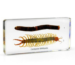 $enCountryForm.capitalKeyWord NZ - Acrylic Resin Embedded Centipede&Diplopod Specimen Biology Toys&Gifts Transparent Mouse Paperweight Kids New Popular Science Learning Kits