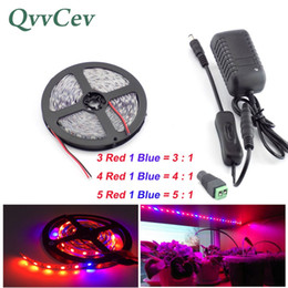 $enCountryForm.capitalKeyWord NZ - Qvvcev Led Strip Growing Plant Light 2M 3M 5M DC12V 2A 3A Red Blue lighting Waterproof SMD5050 Grow Lights Power Adapter+Switch