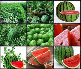 $enCountryForm.capitalKeyWord Australia - New Seeds 2017!30 Pieces Common Watermelon Seeds Delicious Chinese Fruit Water Melon Seeds Bonsai Plants Seeds,#1ELH5X
