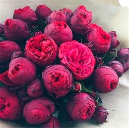 wholesale peony seeds Australia - 20 Pcs Bonsai Rare Chinese Peony Seeds Plant Of Greenery And Flowers Terrace Courtyard Garden Paeonia Suffruticosa Seeds Diy Garden Plants