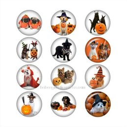 New Tv Glasses Australia - New Halloween Dog cat glass snap button for snaps jewelry Round DA1054 jewelry making DIY Findings